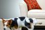 Orinar en la correa o en otros perros
