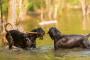 5 Consejos para que tus perros aprendan a nadar
