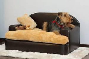 ¿Mensajes mezclados si el perro está permitido en un sofá pero no en el otro?