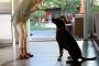 Comprender los ingredientes de los alimentos para mascotas