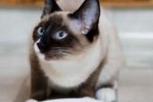 Dieta para gatos con artritis