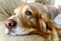 Entonces, tu perro tiene cáncer canino: esto es lo que debes hacer a continuación