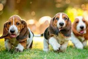 Actividad reducida del estómago en perros