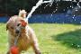 Ayuda a tu perro a ganarle al calor en el verano