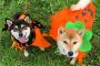 Qué hacer y qué no hacer para Halloween
