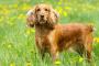 Obstrucción de la vesícula biliar en perros