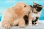 Presentando gatos a perros (nuevos)