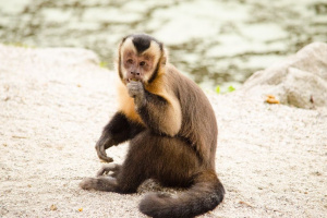 Descripción de los primates no humanos