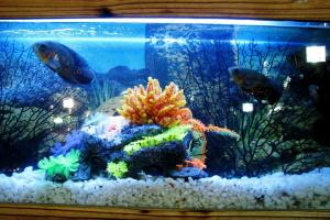 Proporcionar un hogar para sus peces