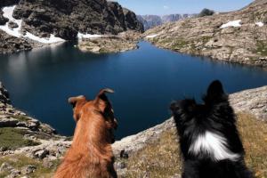Cortes y moretones en perros