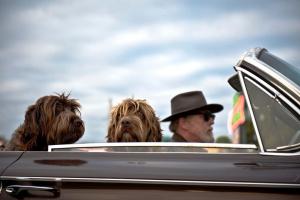 ¿Cómo y por qué se ven afectados los cachorros cuando se dejan en un automóvil?