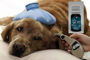 Mes de la concientización sobre el cáncer en mascotas
