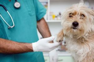 ¿Que hacer si su perro tiene cáncer canino?