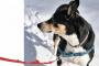 Terapia física para perros