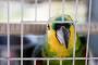 El tamaño de jaula adecuado para su ave mascota
