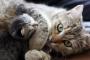 Los gatos y las etapas de embarazo