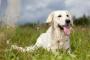 El exceso de fósforo en la sangre en los perros