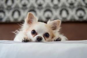 Toxicidad de vitamina D en perros