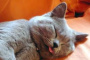 Advil envenenamiento en gatos