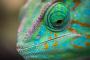 Atención médica de rutina de los reptiles
