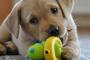 Seleccionando el juguete perfecto para perros