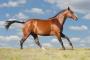 Infecciones bacterianas intestinales en caballos
