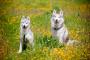 Apoye a su perro al aire libre y en el interior con una actividad saludable