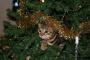 Cómo decorar con seguridad en Navidad
