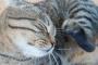Bartonelosis: otra razón para que los dueños de mascotas desterrarán las pulgas