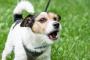 Abordar la agresión de la correa en los perros
