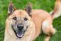 Infección por Salmonella en perros