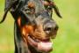 El papel de la dieta en el tratamiento de perros epilépticos