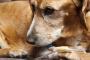 Pancreatitis en perros: síntomas, causas y tratamientos.