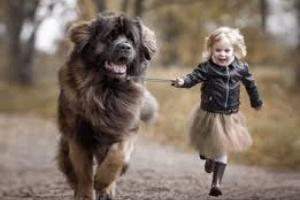 Seguridad para perros y niños