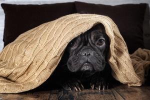 ¿Tu perro le tiene miedo a todo?