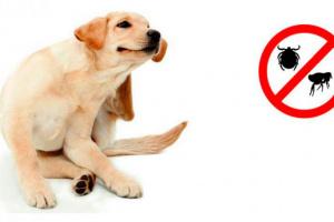 Consejos para las garrapatas en tu perro