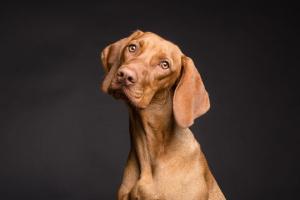 ¿Mi perro es sordo?