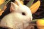 Pérdida parcial o completa de control muscular en conejos
