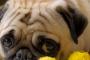 Incontinencia de perro y problemas de vejiga