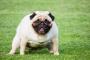 Hematoquecia en perros: síntomas, causas y tratamientos.