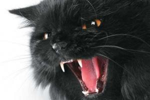 Formas de manejar la agresión de tus gatos