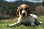 Consejos sobre garrapatas para dueños de perros