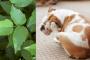 Hiedra Venenosa en perros: cómo se ve, síntomas y tratamiento.