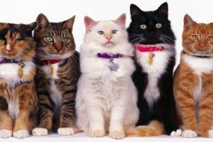 10 cosas que debes saber antes de ser dueño de un gato