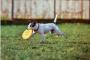 6 maneras de ayudar a nuestros perros a vivir sus mejores vidas