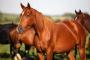 Envenenamiento por escarabajo blister en caballos