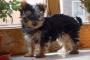 Tratamiento de fracturas en gatos y perros