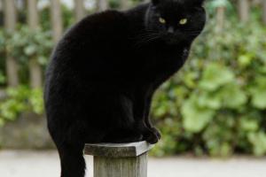 ¿Por qué los gatos están asociados con las brujas?