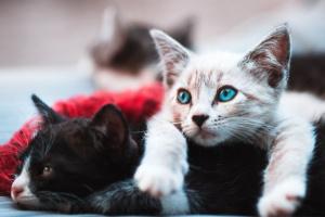 Trastorno obsesivo compulsivo (TOC) en gatos