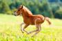 Absceso en caballos